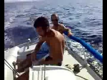 veleggiata con meteor gorda freedom 2